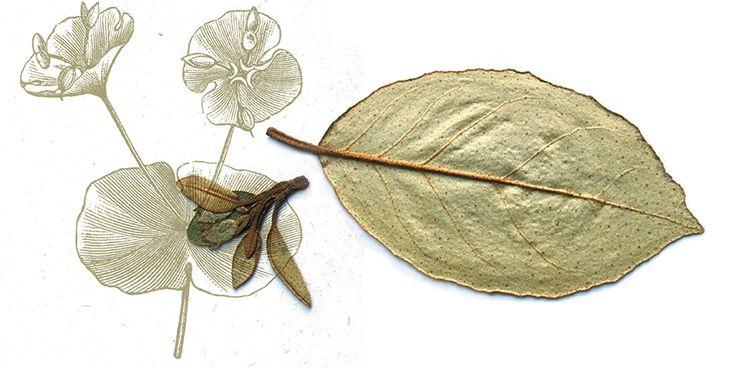 http://www.plantes-et-sante.fr/decouvrir/pour-le-renouveau-du-metier-d-herboriste-signez-la-petition