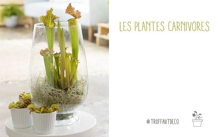 Les 25 meilleures id es de la cat gorie plantes carnivores for Vente de plantes sur internet