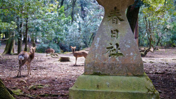 No to Nara, miasto dla jeleni