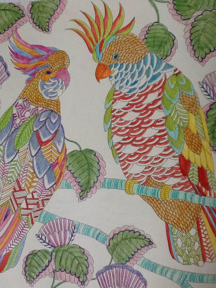 Millie Marotta, parots, kleueren, coloring, Tropisch Paradijs