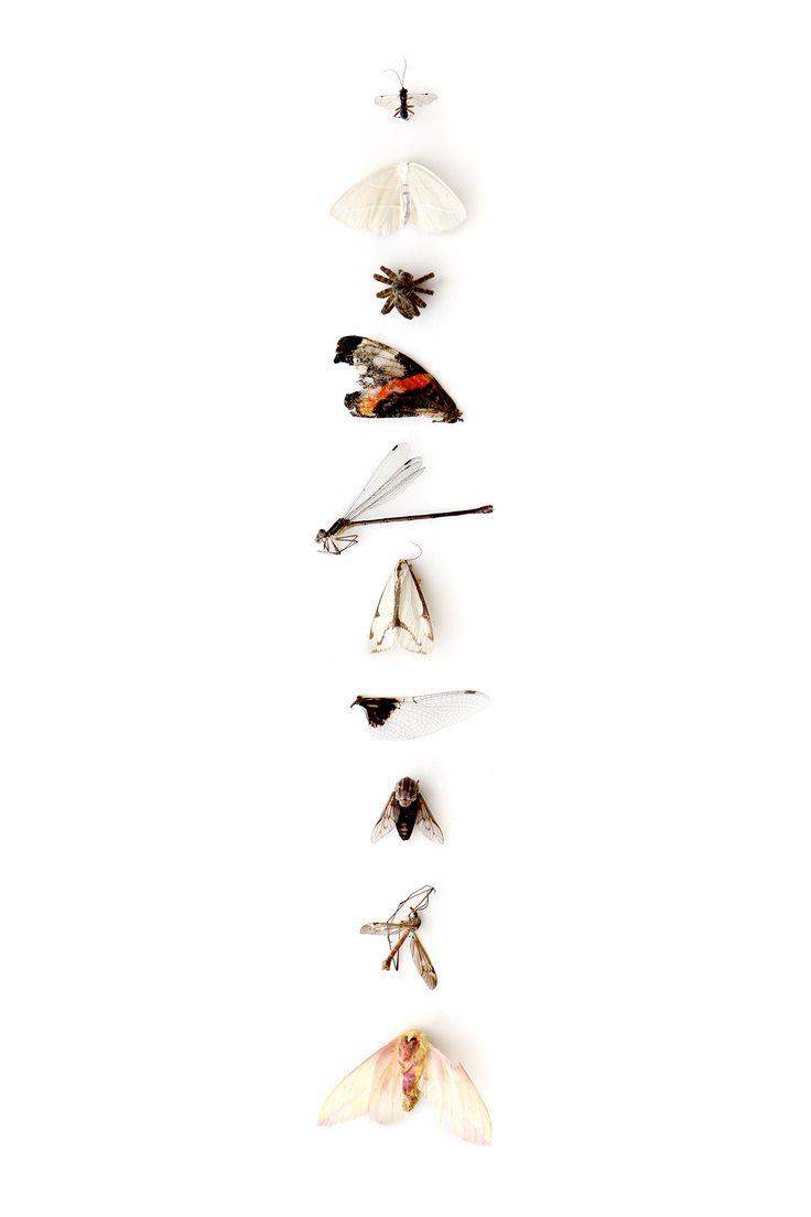 july bugs (mary jo hoffman)
