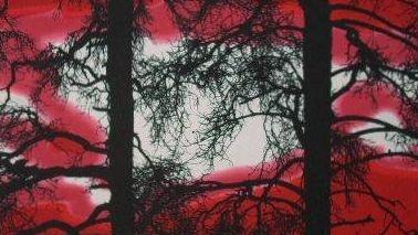 Punainen tai liila Kelohonka (Vallilla)