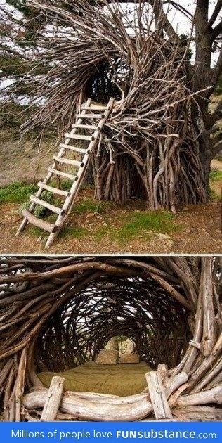 Cozy Tree House or Nest?