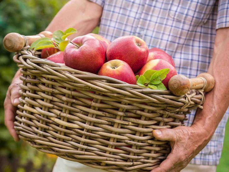 Ideoita omenien käyttöön