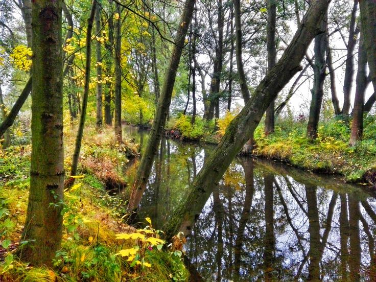 #autumn #river