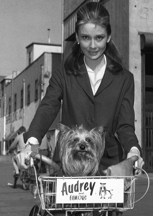 Audrey Hepburn with her dog, Famous, on the set of Breakfast at Tiffany's, 1960.
