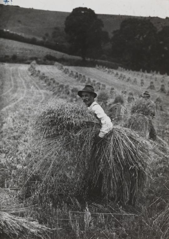 A photograph of a farm worker bringing in the harvest, Sussex, taken in July 1937 by Edward G Malindine for the Daily Herald.