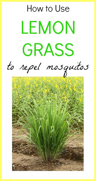 Definitely trying this! How to Use Lemon Grass To Repel Mosquitos