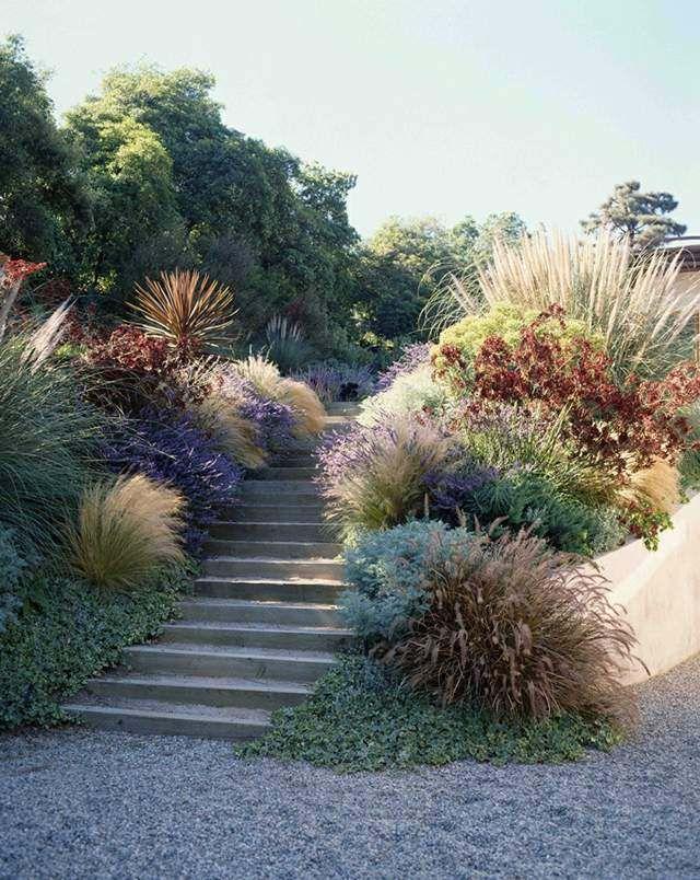 Plantes succulentes et graminées ornementales dans le jardin                                                                                                                                                                                 Plus