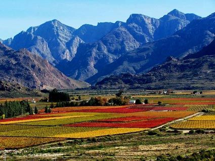The Breede River Valley in autumn