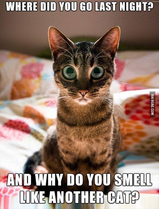 Best 25 Funny Captions Ideas On Pinterest Amazing Funny