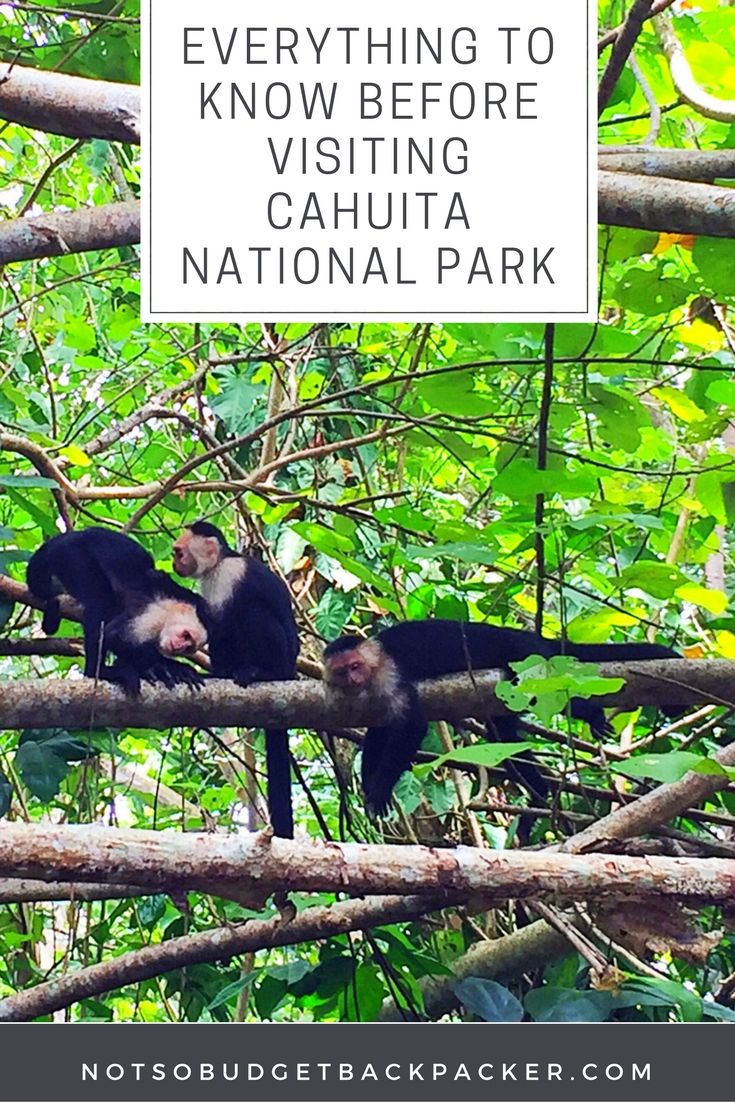 Understanding how the park works and how to get there and around it can be confusing, so here's my ultimate guide to Cahuita National Park Costa Rica. // Cahuita National Park hiking, Puerto Viejo to Cahuita National Park, Cahuita Costa Rica, Cahuita Limon, Parque Nacional Cahuita, Cahuita National park hotel, Cahuita National Park map, Cahuita National Park activities, Cahuita National Park hours, Cahuita Costa Rica National Parks, Cahuita Costa Rica Hotels