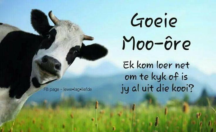 Moooore