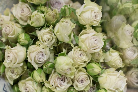 Lilac Silver Rain Spray Roses at New Covent Garden Flower Market - April 2016