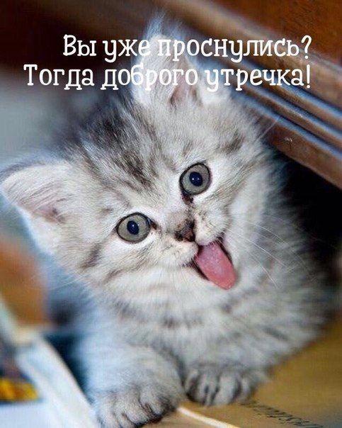 Картинки с котятами доброе утро любимая прикольные
