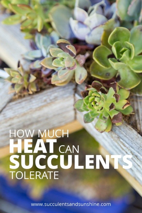 This post was so helpful! My succulents have been getting too hot and aren't doing very well