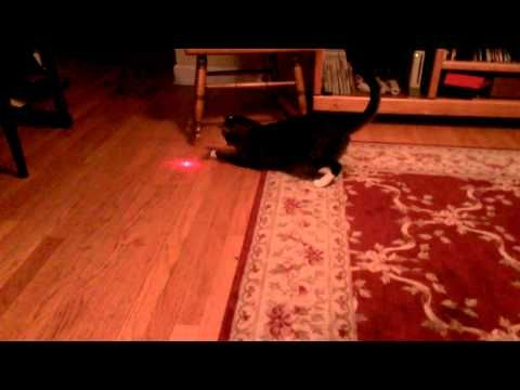 I taped laser pointer to my cat's head. He was chasing it for over an hour. Here is a little taste. No cat was harmed during making of this video. For licens…