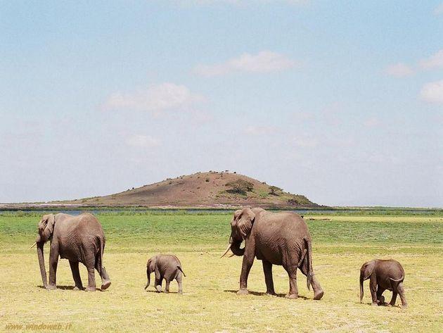 bracconaggio elefanti leonardo di caprio