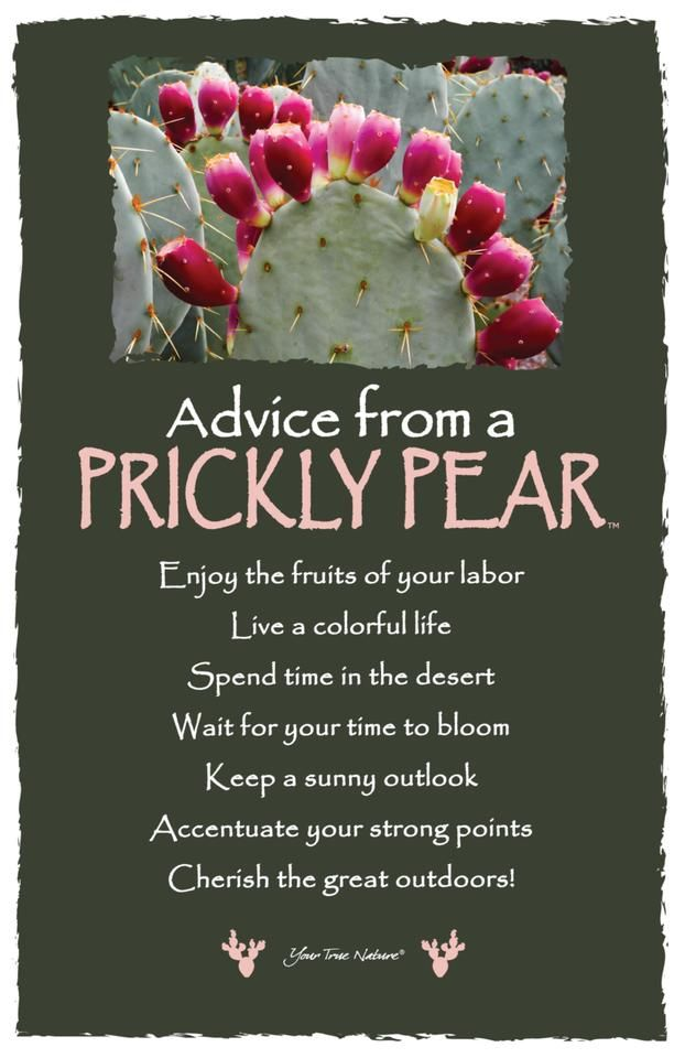 Advice From A Prickly Pear Frameable Art Card Your True Nature