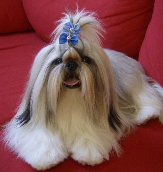 Long hair with a bow