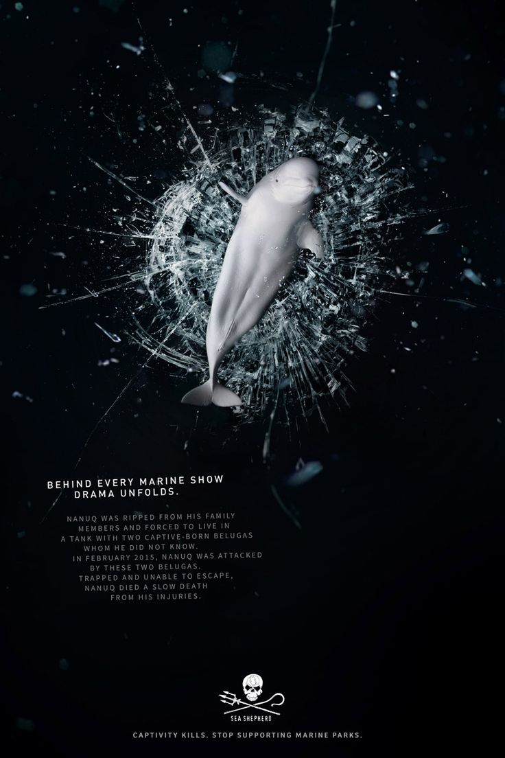 Sea Shepherd Debuts Powerful Online Images to Combat Dolphin and Whale Captivity