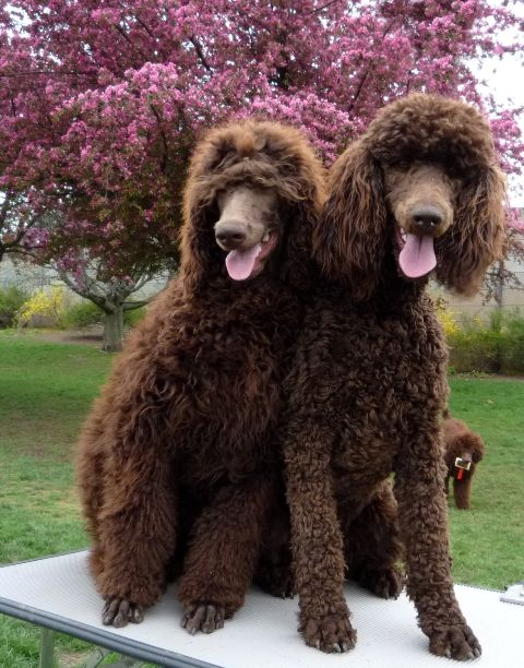 I would name them Truffle and Cocoa! I want them. :(