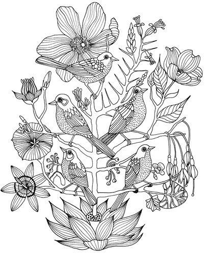 Geninne D Zlatkis, Sparrows