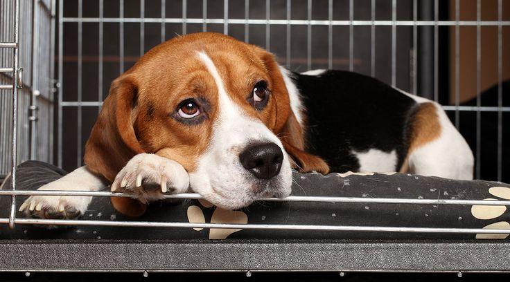 Caixas de transporte são ao mesmo tempo dispositivos de segurança e de treinamento, e beneficiam tanto o cão quanto seu dono.