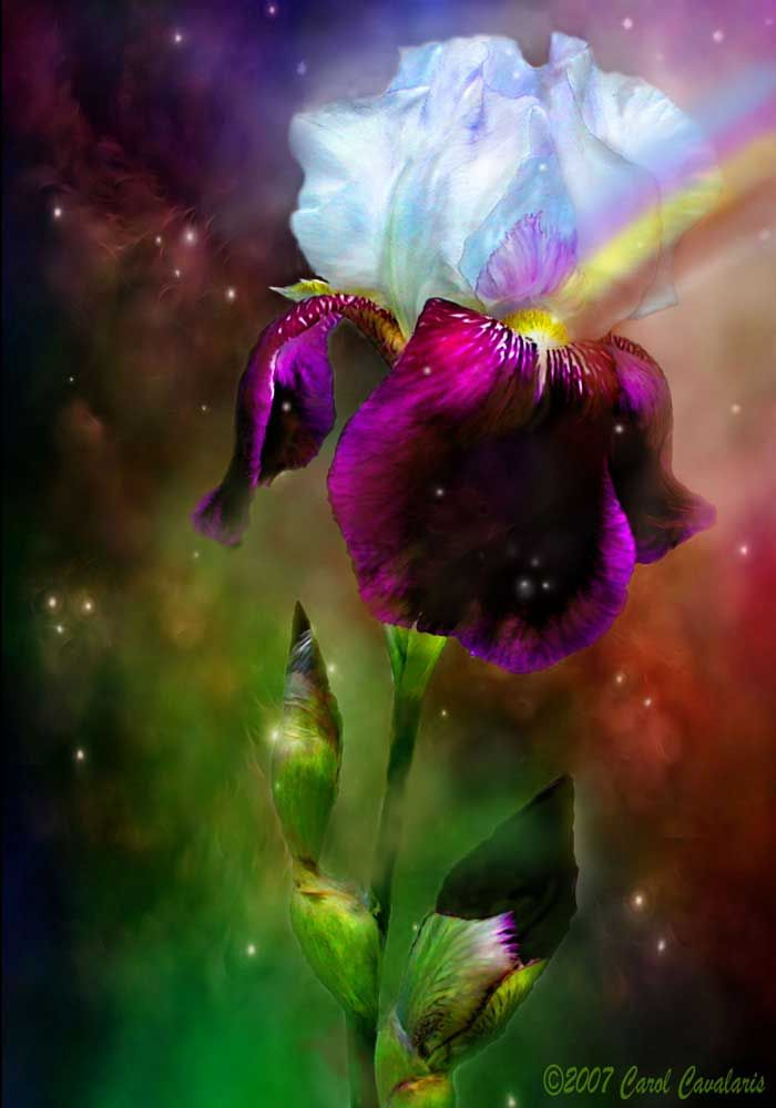 Iris  Goddess of the rainbow  How gently your beauty flows  Like a watercolor bridge  Between desires and wishes  Sun kissed and rain swept  You are the messenger  Of promises made  And promises kept.