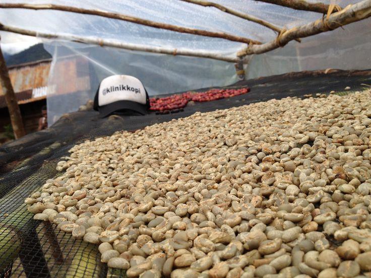 Biji kopi dr Desa pelebip, pegunungan Bintang papua