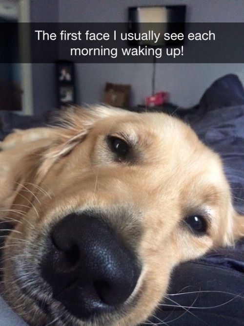 The first face I usually see each morning waking up! via