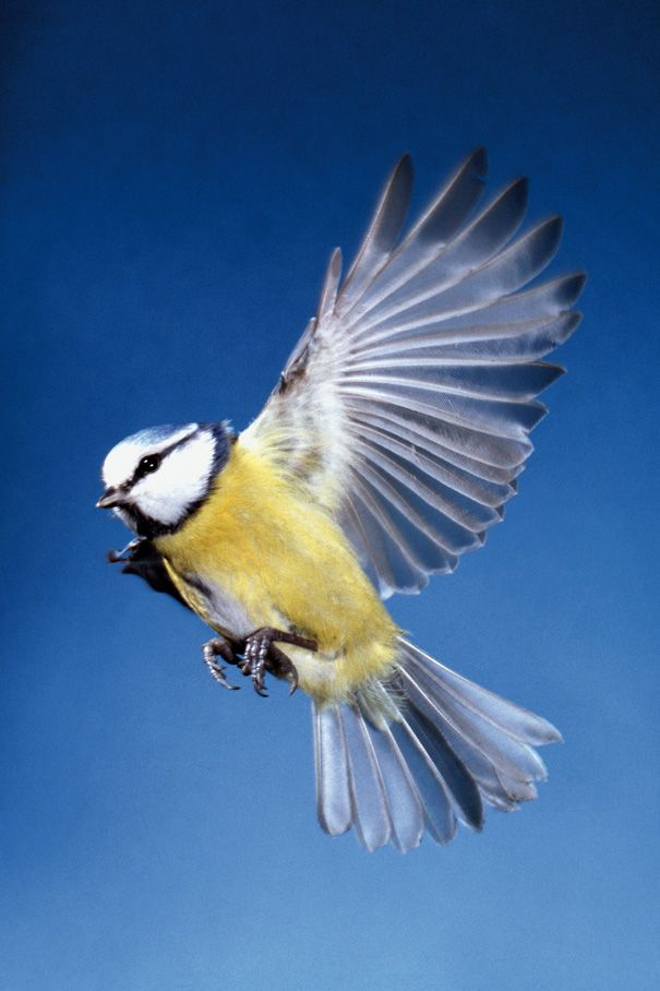 Top tip for Photographing Birds