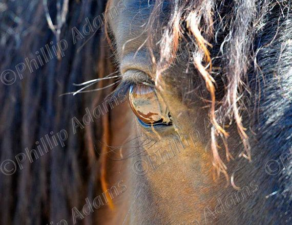 reflection in her eye 2 mustang filly 85 x 11 by nevadawilds nevadawilds