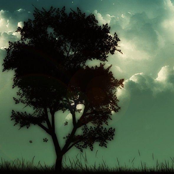Night Sky Behind The Tree