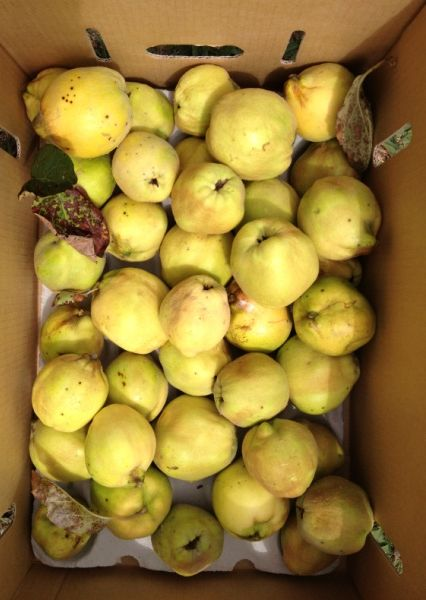 Our young quince tree pretty much doubles the amount of fruit it produces each year. This year there are plenty for quince paste, jelly and poached fruit, next year I may be setting up a factory!