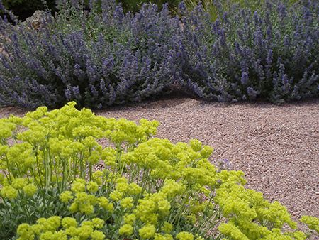 78 best Native Garden Tour, Granada Hills images on Pinterest ...