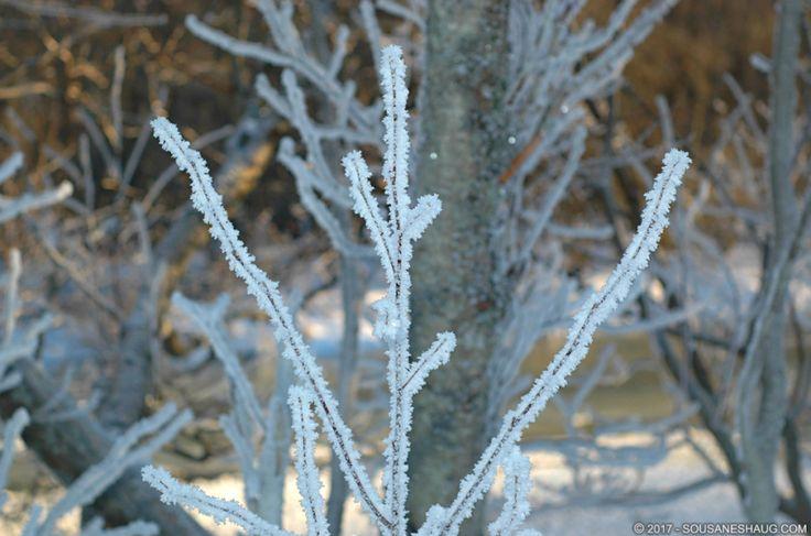 #SousaNeshaug #frost #icecrystal #ice #cold #Norway #winter (C) 2017 Sousa & Neshaug Photography - http://sousaneshaug.com