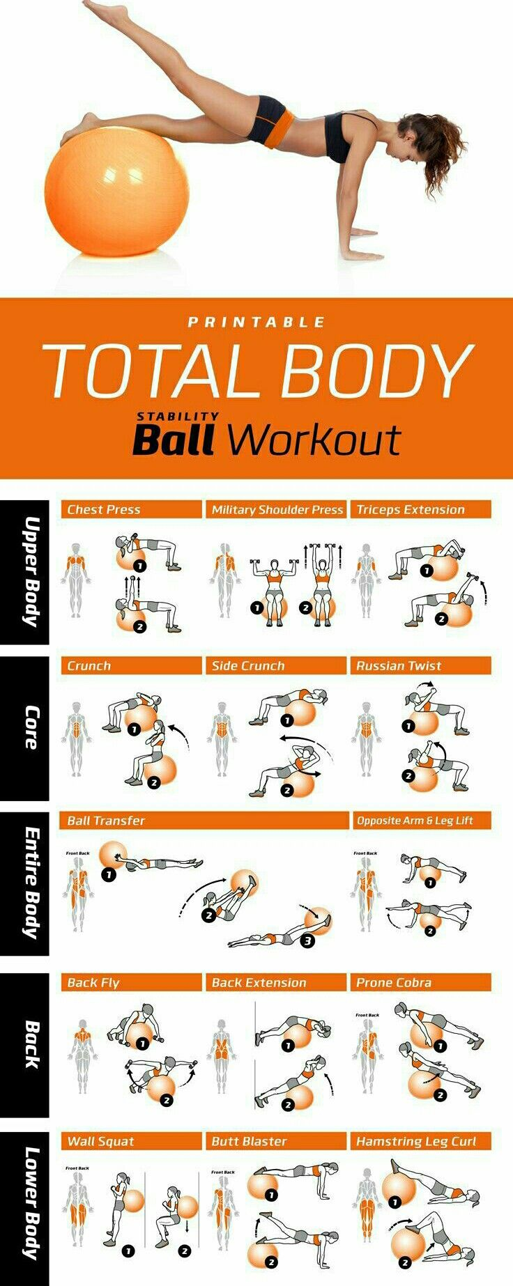 TOTAL-Body Workout using a STABILITY Exercise BALL