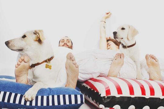 Ohhhmydog: Μία εγκληματολόγος φτιάχνει αξεσουάρ για σκύλους