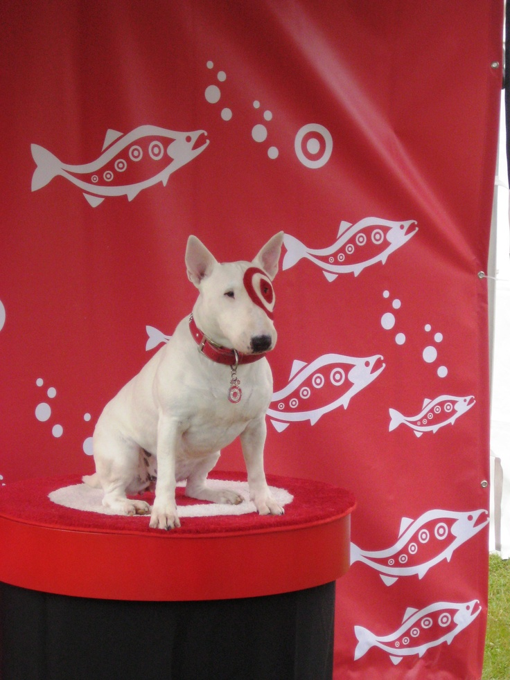 17 best images about spot the target dog on pinterest What kind of dog is the target mascot