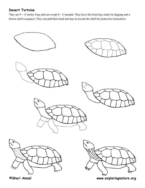 tortoise drawing for pinterest - photo #48