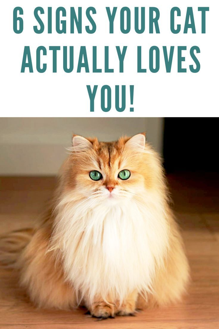 Have You Ever Wondered If Your Cat Loves You Cats Express Love For Their Owners In A Number Of Ways While Some Of These May Be A B Cats Funny Cats