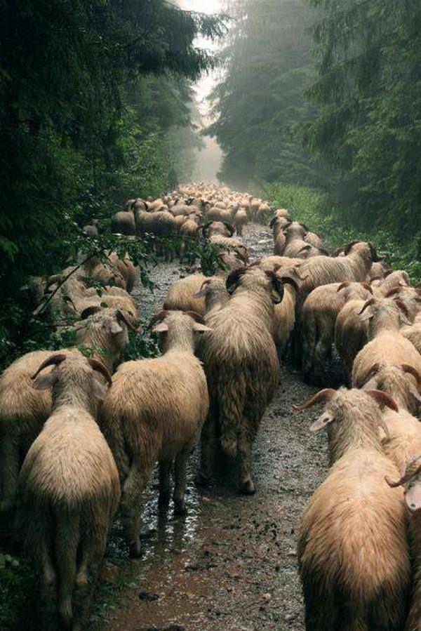 Apuseni Mountains - Romania Photo: Oana Raluca Ghiocel