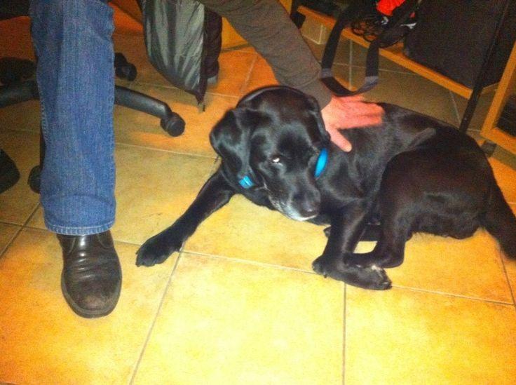 Ritrovato cane guida per non vedenti rubato a Roma