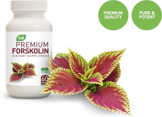 Forskolin, also known as Coleus Forskohlii, is an Ayurvedic plant that has been used in Asia for centuries and is apart of the mint and lavender family. Forskolin is a chemical found in the roots of these plants that generally grow in the mountains. The popularity of Forskolin has gone up since it has been discovered by Dr. Oz and weight loss expert Lisa Lynn. When they realized just what it could do they had to let the whole world know.