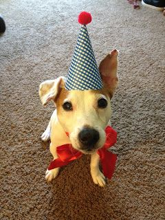 Daydreamer, Creator, DIY Extraordinaire: Dog Birthday Party!