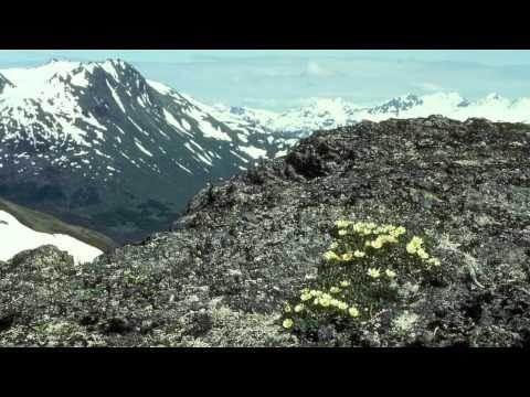 Taiga y Tundra