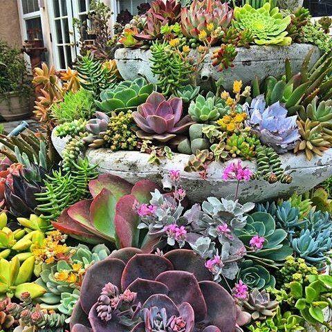 1000 id es sur le th me arrangements de plantes grasses for Artichaut plante grasse