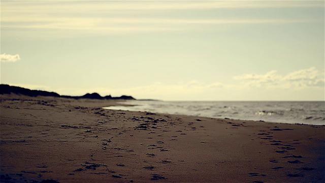 beach loop short HD