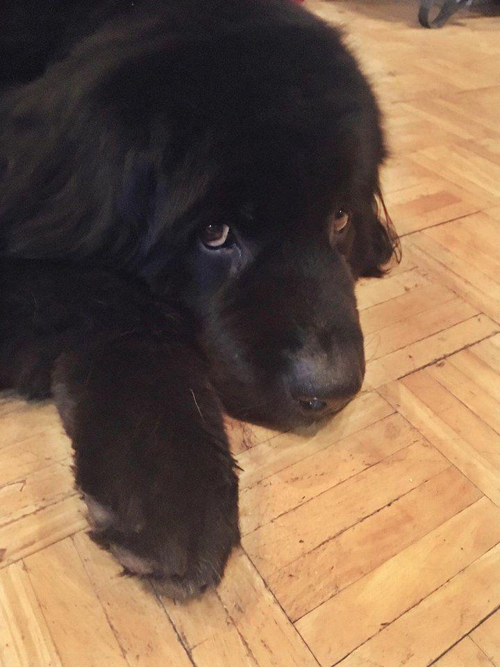 Cny Firefighters Rescue 165 Pound Dog From Ravine Dogs Dog Cat